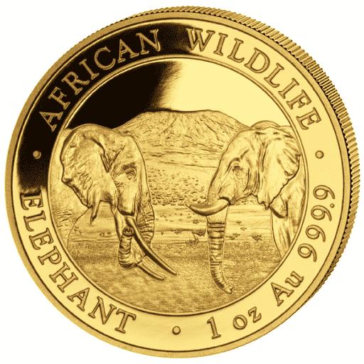 African Wildlife Elephant